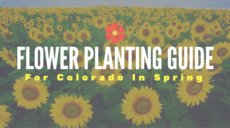 Flower planting guide for colorado in spring union colony insurance flower planting guide for colorado in spring mightylinksfo